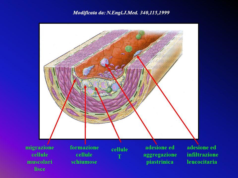 migrazione cellule muscolari lisce formazione cellule schiumose adesione ed infiltrazione leucocitaria cellule T Modificata da: N.Engl.J.Med. 340,115,