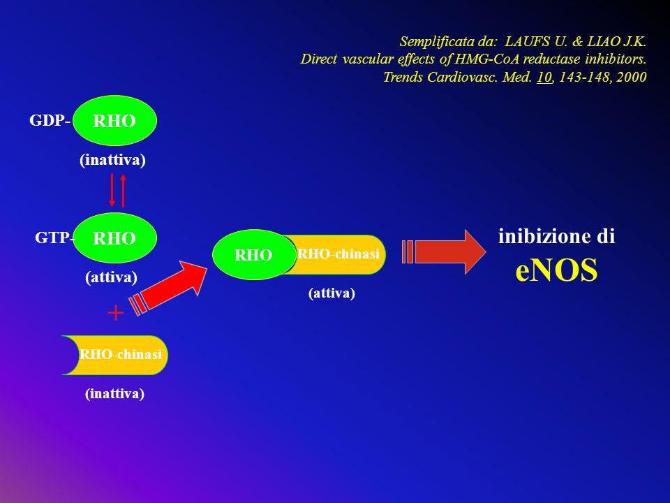 RHO RHO-chinasi GDP- GTP- (inattiva) (attiva) (inattiva) + inibizione di eNOS Semplificata da: LAUFS U. & LIAO J.K. Direct vascular effects of HMG-CoA