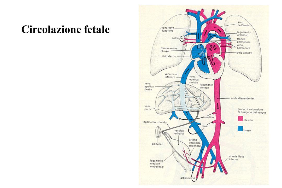 Difetto del Setto Interatriale TeleRx vascolarizzazione polmonare Dilatazione tronco polmonare e rami principali O.C.