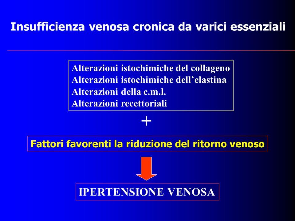 Insufficienza venosa cronica da varici essenziali Fattori favorenti la riduzione del ritorno venoso IPERTENSIONE VENOSA Alterazioni istochimiche del c
