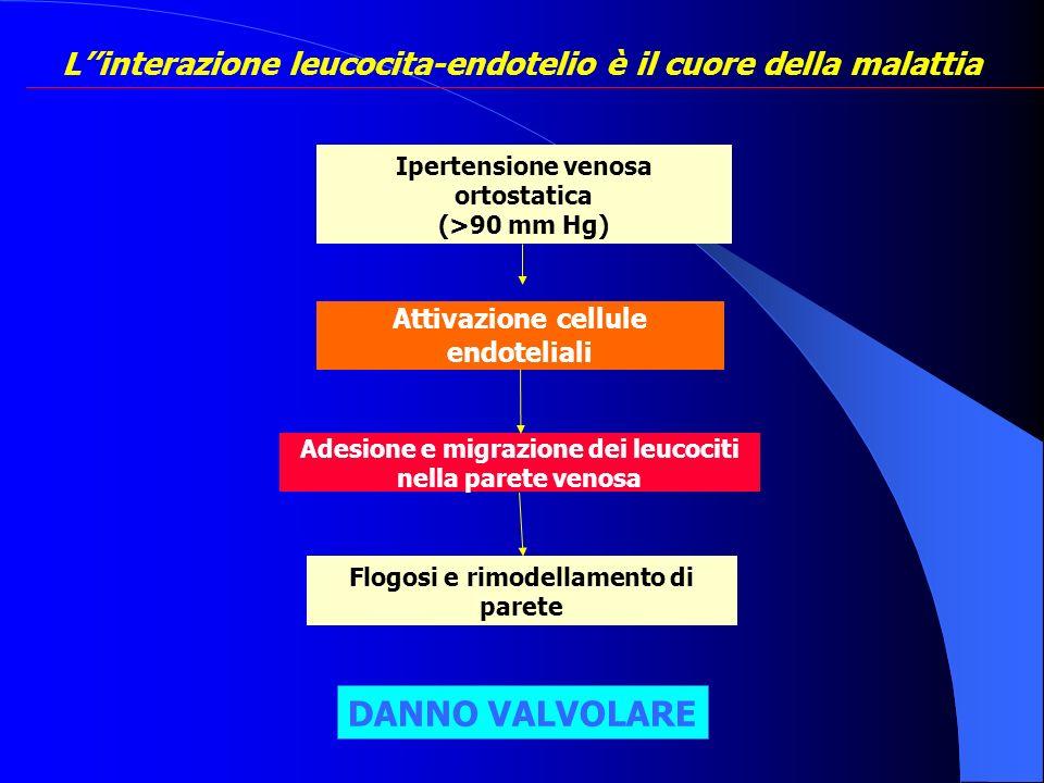 Linterazione leucocita-endotelio è il cuore della malattia Attivazione cellule endoteliali Adesione e migrazione dei leucociti nella parete venosa Flo