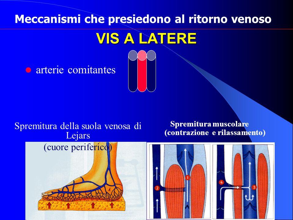 VIS A LATERE arterie comitantes Meccanismi che presiedono al ritorno venoso Spremitura della suola venosa di Lejars (cuore periferico) Spremitura musc