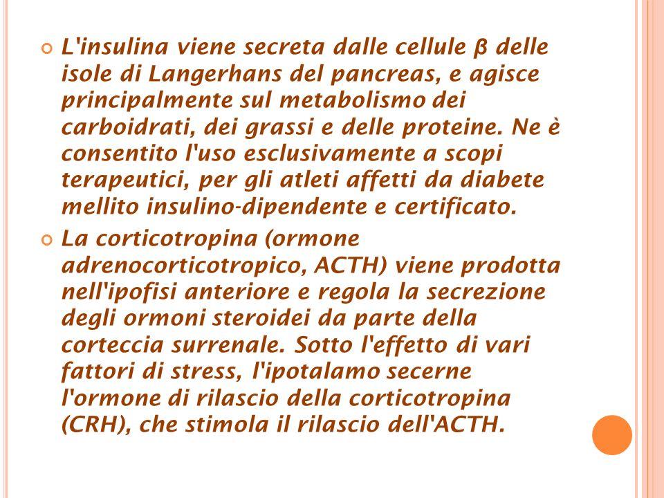 L insulina viene secreta dalle cellule β delle isole di Langerhans del pancreas, e agisce principalmente sul metabolismo dei carboidrati, dei grassi e delle proteine.