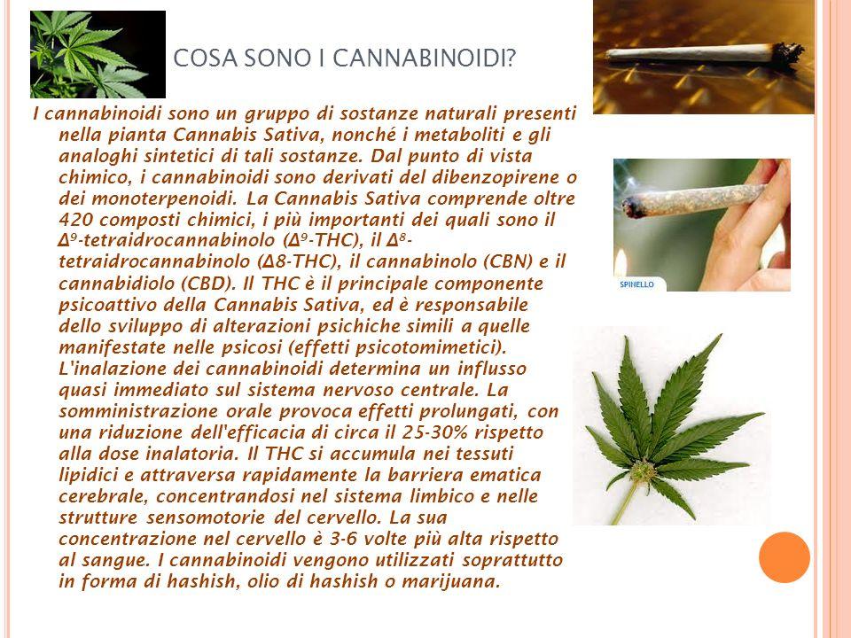 COSA SONO I CANNABINOIDI? I cannabinoidi sono un gruppo di sostanze naturali presenti nella pianta Cannabis Sativa, nonché i metaboliti e gli analoghi
