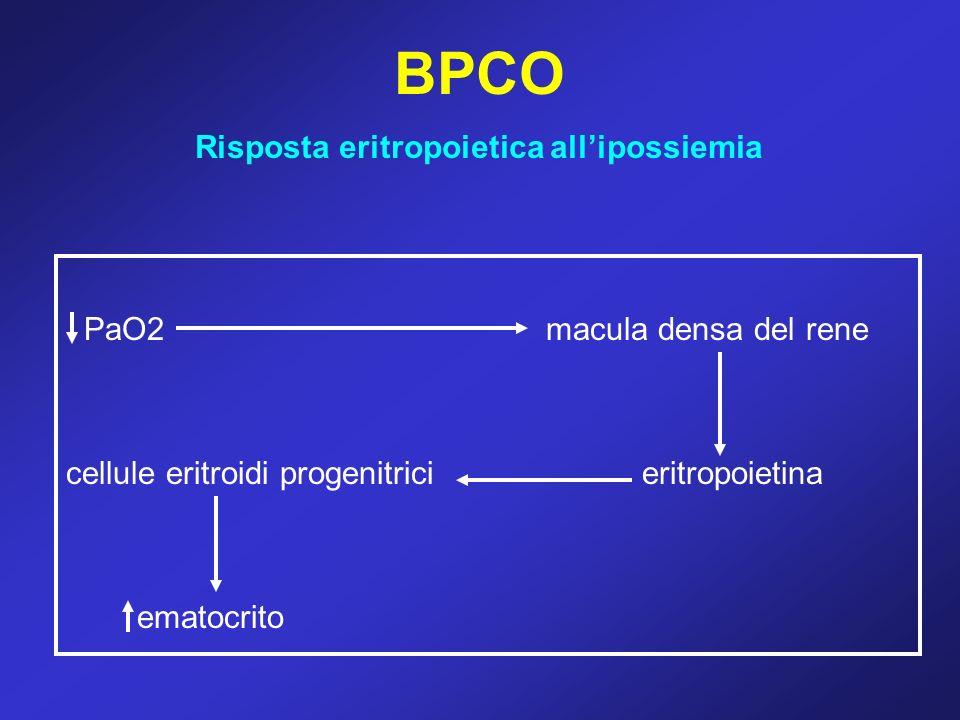 BPCO Risposta eritropoietica allipossiemia PaO2macula densa del rene cellule eritroidi progenitricieritropoietina ematocrito