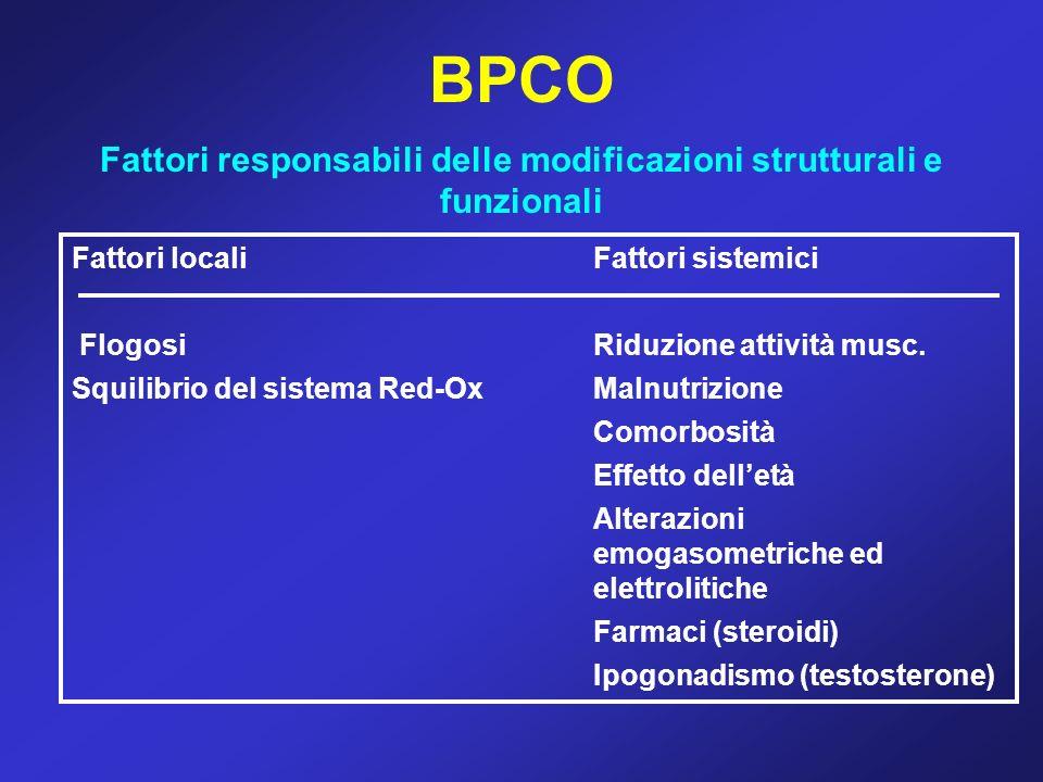 BPCO Fattori responsabili delle modificazioni strutturali e funzionali Fattori localiFattori sistemici FlogosiRiduzione attività musc. Squilibrio del