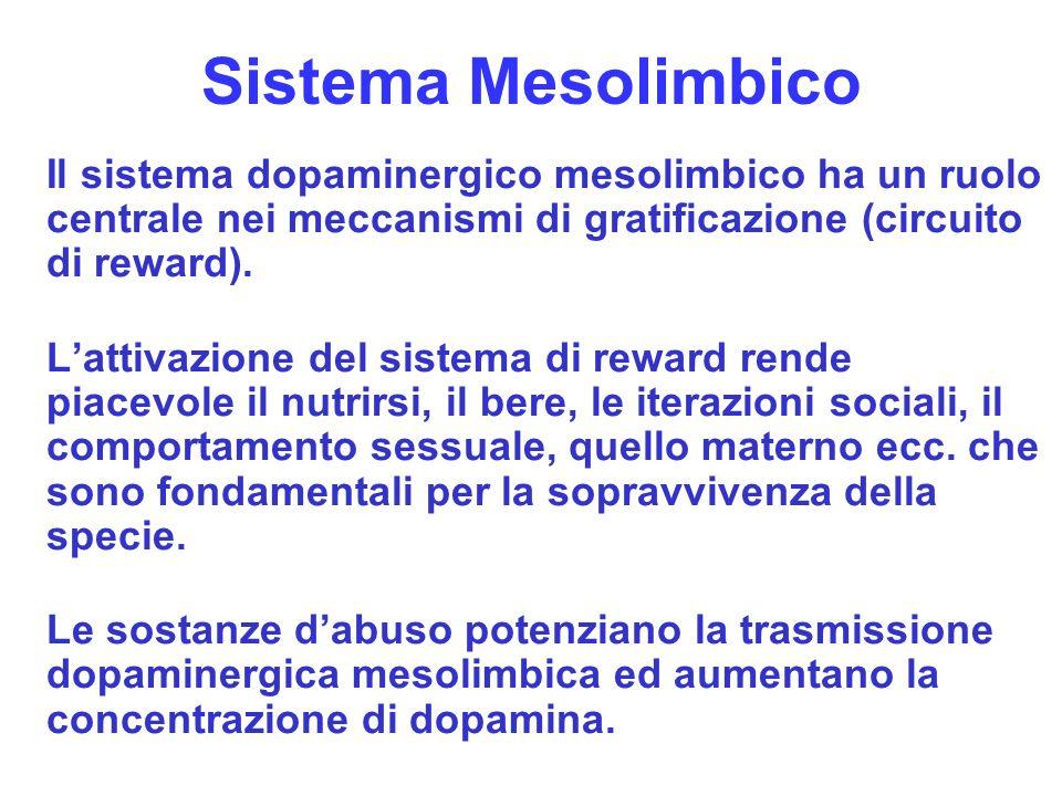 8 Sistema Mesolimbico Il sistema dopaminergico mesolimbico ha un ruolo centrale nei meccanismi di gratificazione (circuito di reward). Lattivazione de