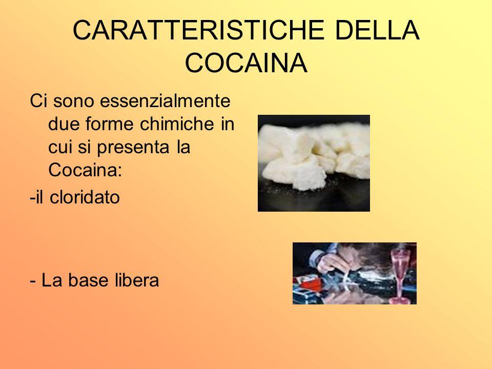 CARATTERISTICHE DELLA COCAINA Ci sono essenzialmente due forme chimiche in cui si presenta la Cocaina: -il cloridato - La base libera