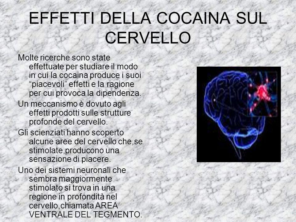 EFFETTI DELLA COCAINA SUL CERVELLO Molte ricerche sono state effettuate per studiare il modo in cui la cocaina produce i suoi piacevoli effetti e la r