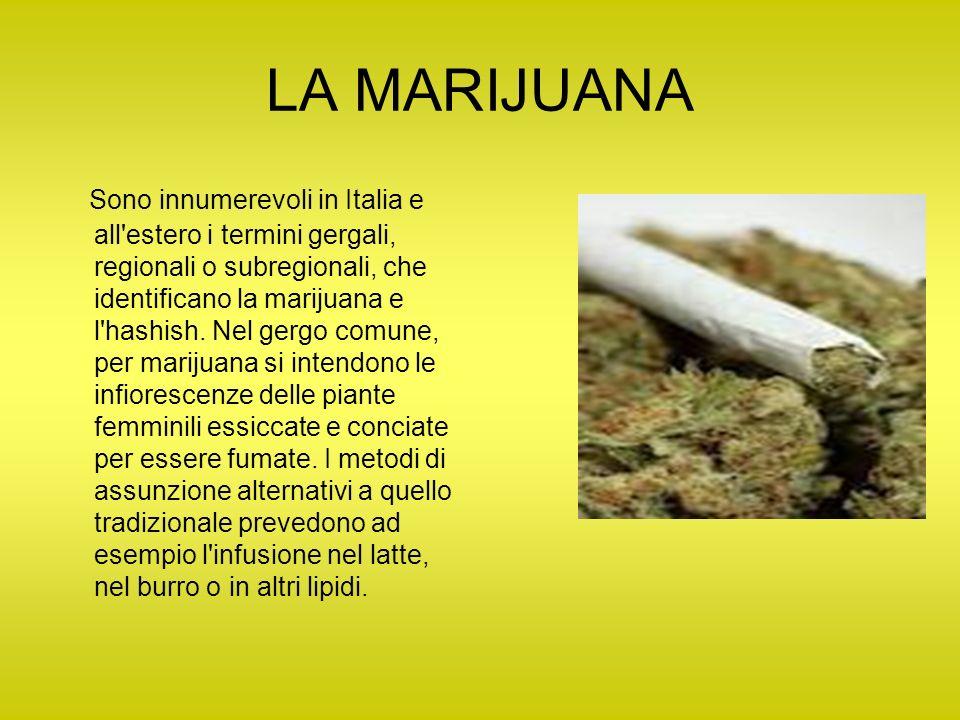 LA MARIJUANA Sono innumerevoli in Italia e all'estero i termini gergali, regionali o subregionali, che identificano la marijuana e l'hashish. Nel gerg