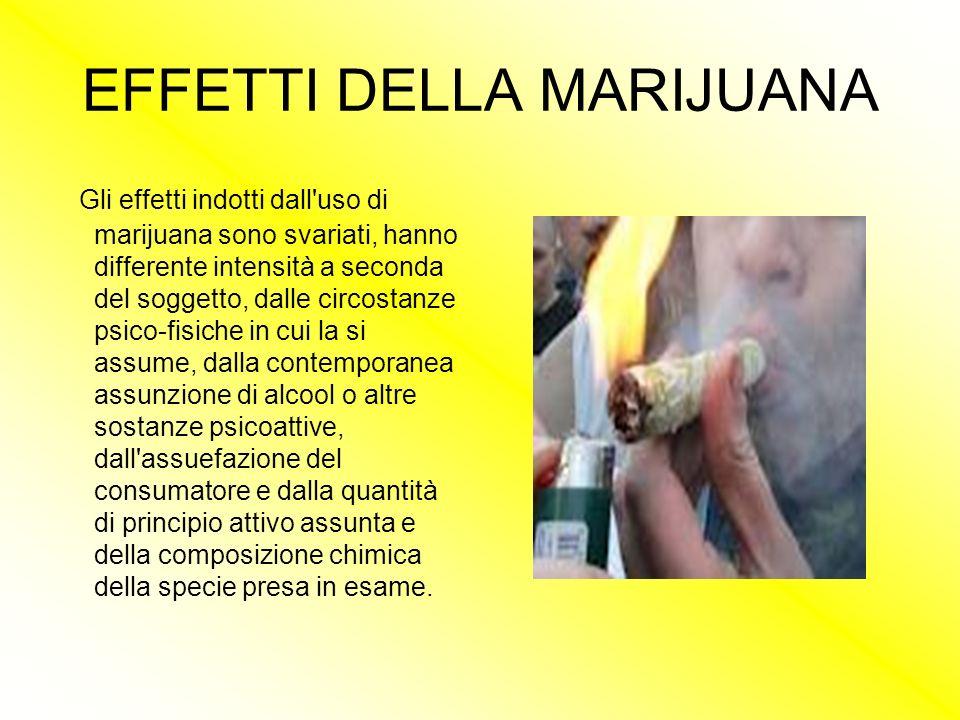 EFFETTI DELLA MARIJUANA Gli effetti indotti dall'uso di marijuana sono svariati, hanno differente intensità a seconda del soggetto, dalle circostanze