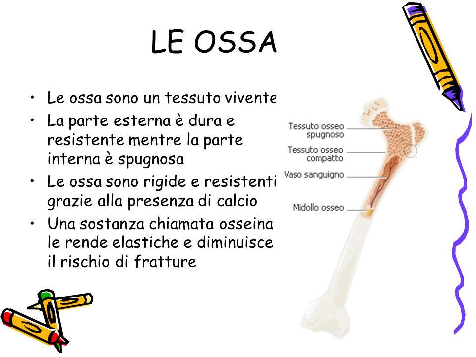 LE OSSA Le ossa sono un tessuto vivente La parte esterna è dura e resistente mentre la parte interna è spugnosa Le ossa sono rigide e resistenti grazi