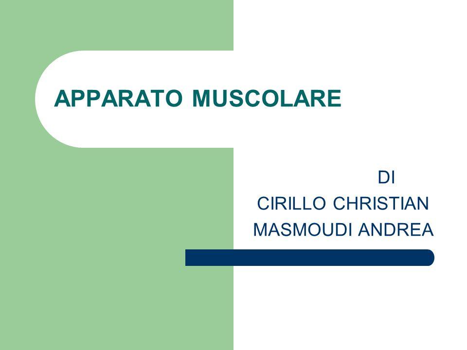 APPARATO MUSCOLARE DI CIRILLO CHRISTIAN MASMOUDI ANDREA