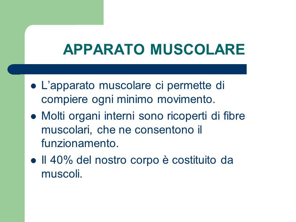 APPARATO MUSCOLARE Lapparato muscolare ci permette di compiere ogni minimo movimento. Molti organi interni sono ricoperti di fibre muscolari, che ne c