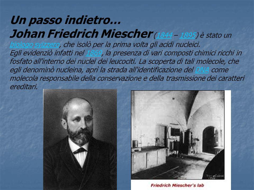 Un passo indietro… Johan Friedrich Miescher (1844 – 1895) è stato un biologo svizzero, che isolò per la prima volta gli acidi nucleici.18441895 biolog