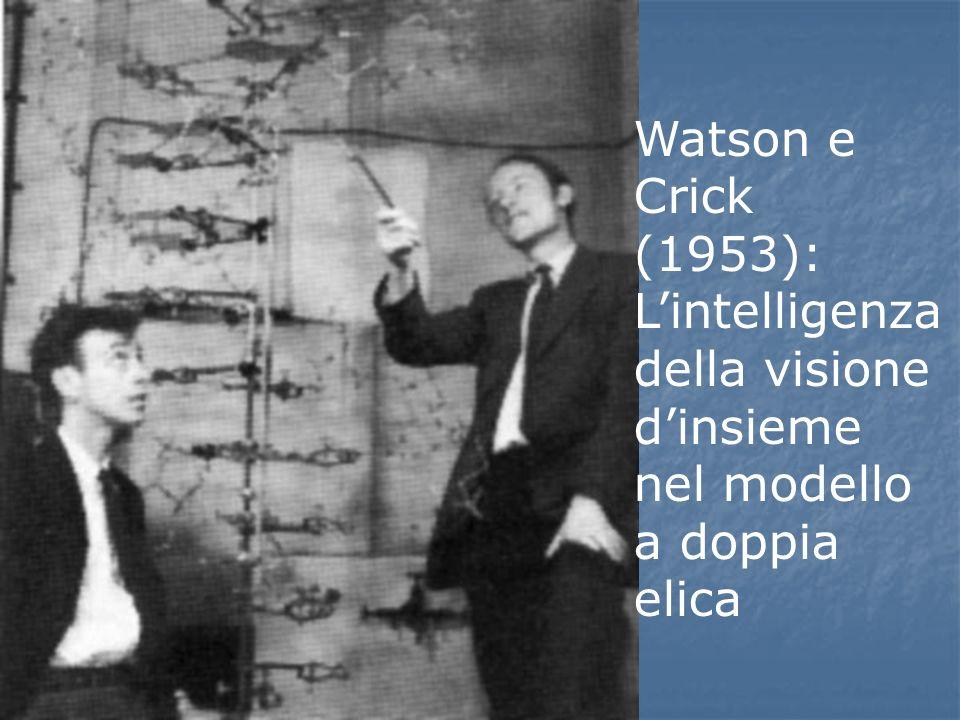 Watson e Crick (1953): Lintelligenza della visione dinsieme nel modello a doppia elica