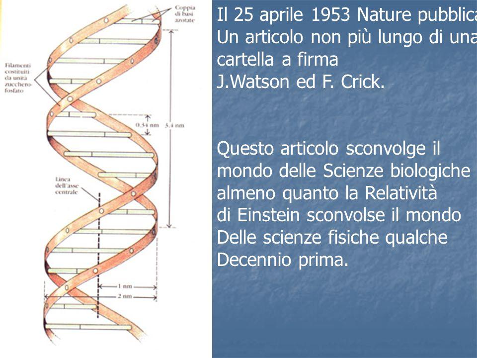 Il 25 aprile 1953 Nature pubblica Un articolo non più lungo di una cartella a firma J.Watson ed F. Crick. Questo articolo sconvolge il mondo delle Sci