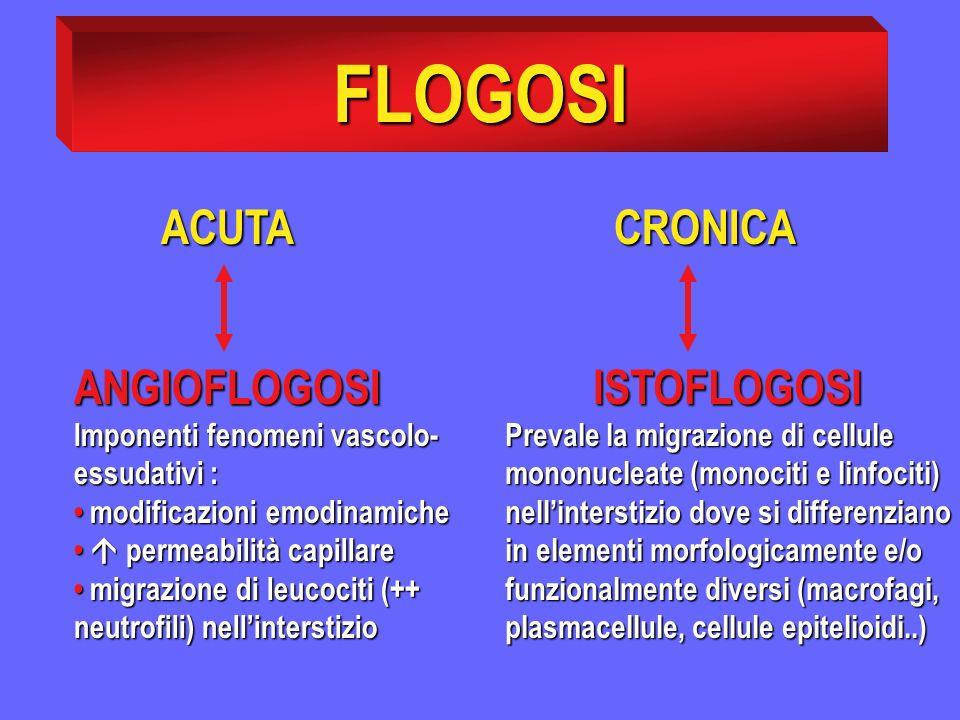 FLOGOSI ACUTA ACUTA CRONICA ISTOFLOGOSI Prevale la migrazione di cellule mononucleate (monociti e linfociti) nellinterstizio dove si differenziano in