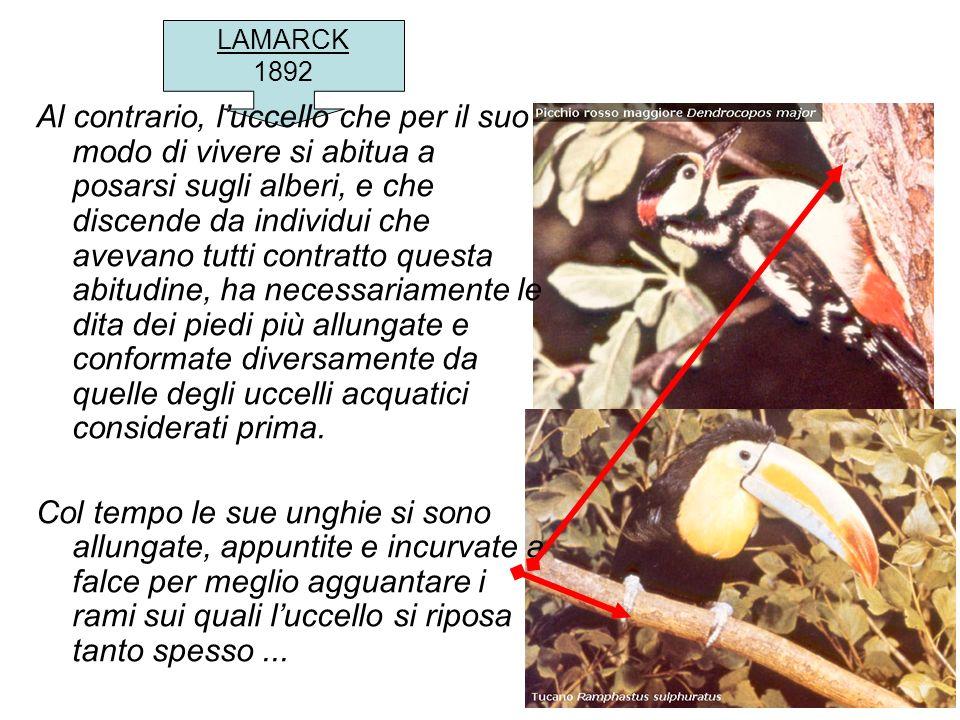 LAMARCK 1892 Al contrario, luccello che per il suo modo di vivere si abitua a posarsi sugli alberi, e che discende da individui che avevano tutti cont
