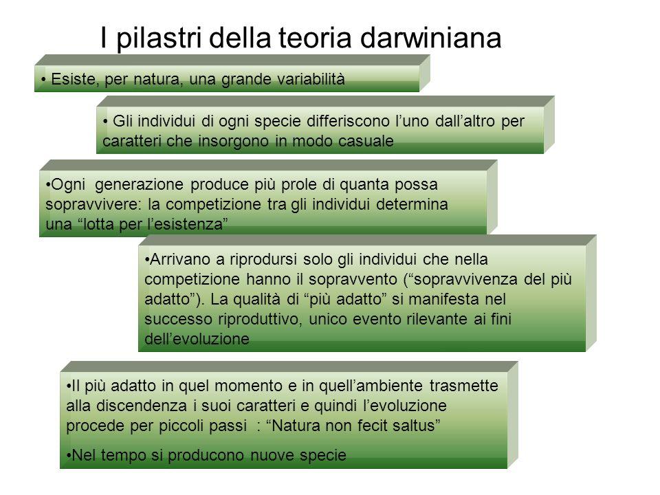 I pilastri della teoria darwiniana Esiste, per natura, una grande variabilità Gli individui di ogni specie differiscono luno dallaltro per caratteri c