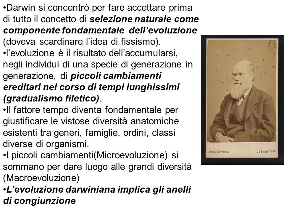 Darwin si concentrò per fare accettare prima di tutto il concetto di selezione naturale come componente fondamentale dellevoluzione (doveva scardinare