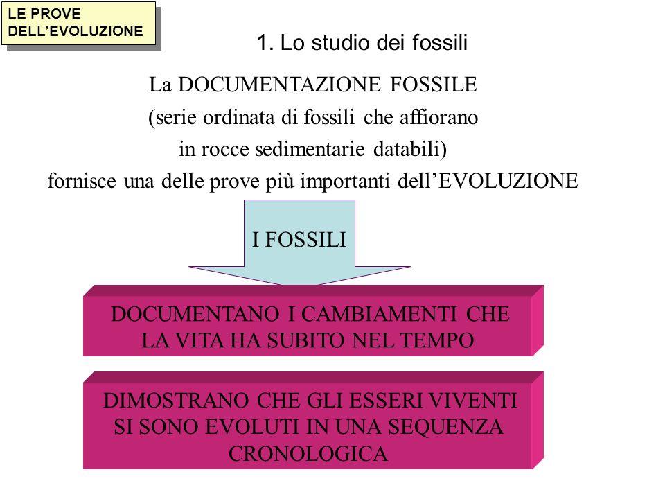 I FOSSILI LE PROVE DELLEVOLUZIONE 1. Lo studio dei fossili La DOCUMENTAZIONE FOSSILE (serie ordinata di fossili che affiorano in rocce sedimentarie da