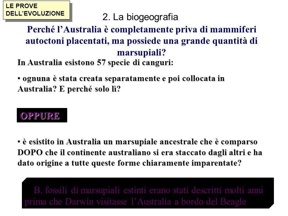 LE PROVE DELLEVOLUZIONE 2. La biogeografia In Australia esistono 57 specie di canguri: ognuna è stata creata separatamente e poi collocata in Australi