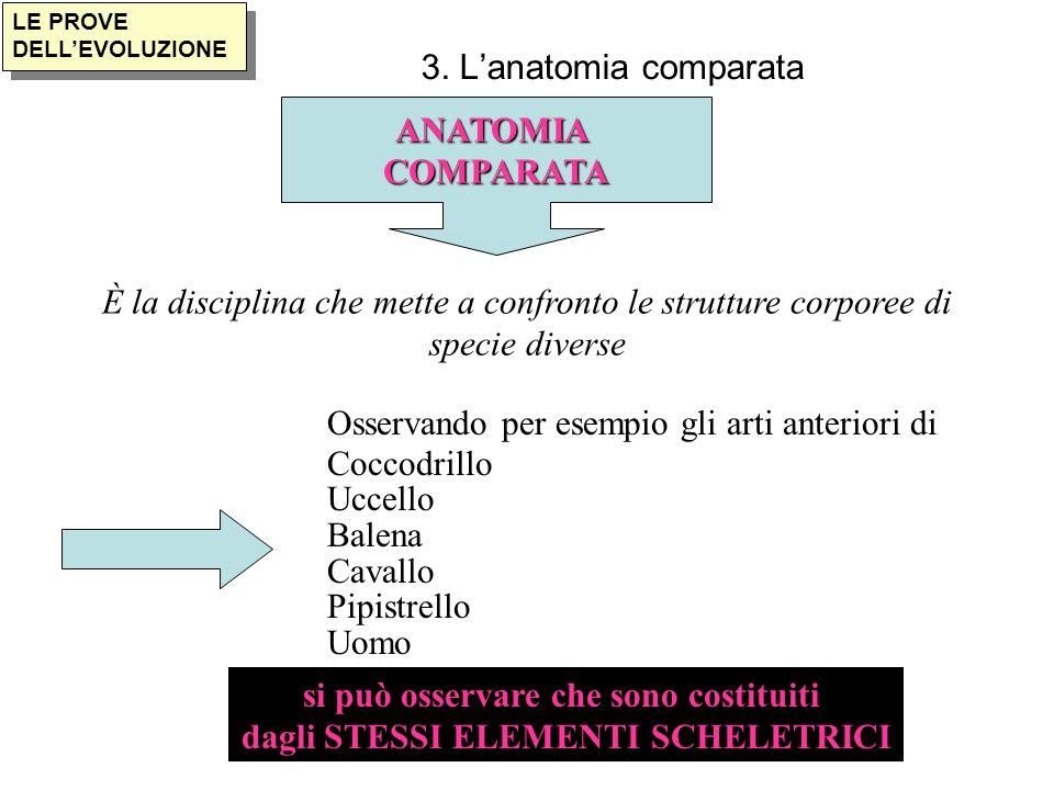 LE PROVE DELLEVOLUZIONE 3. Lanatomia comparata ANATOMIACOMPARATA È la disciplina che mette a confronto le strutture corporee di specie diverse Osserva