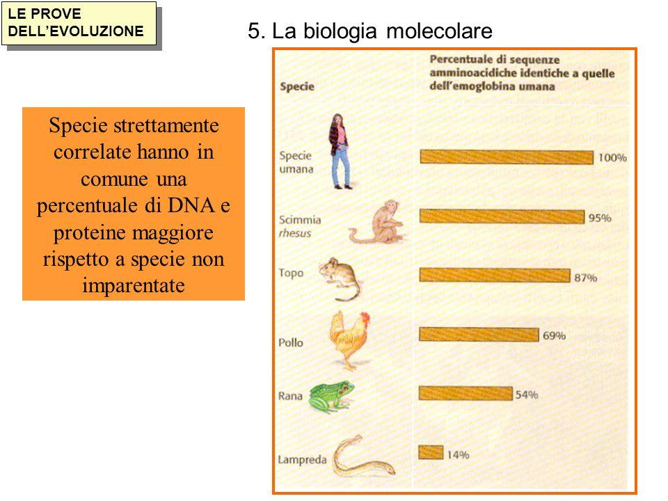 LE PROVE DELLEVOLUZIONE 5. La biologia molecolare Specie strettamente correlate hanno in comune una percentuale di DNA e proteine maggiore rispetto a