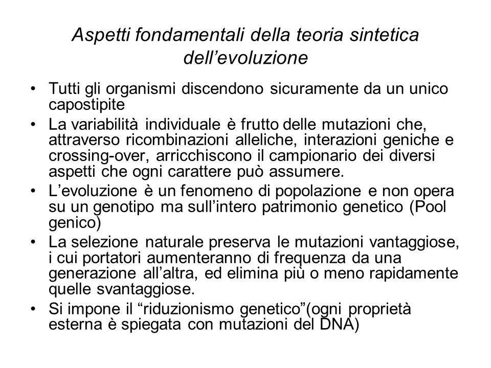 Aspetti fondamentali della teoria sintetica dellevoluzione Tutti gli organismi discendono sicuramente da un unico capostipite La variabilità individua