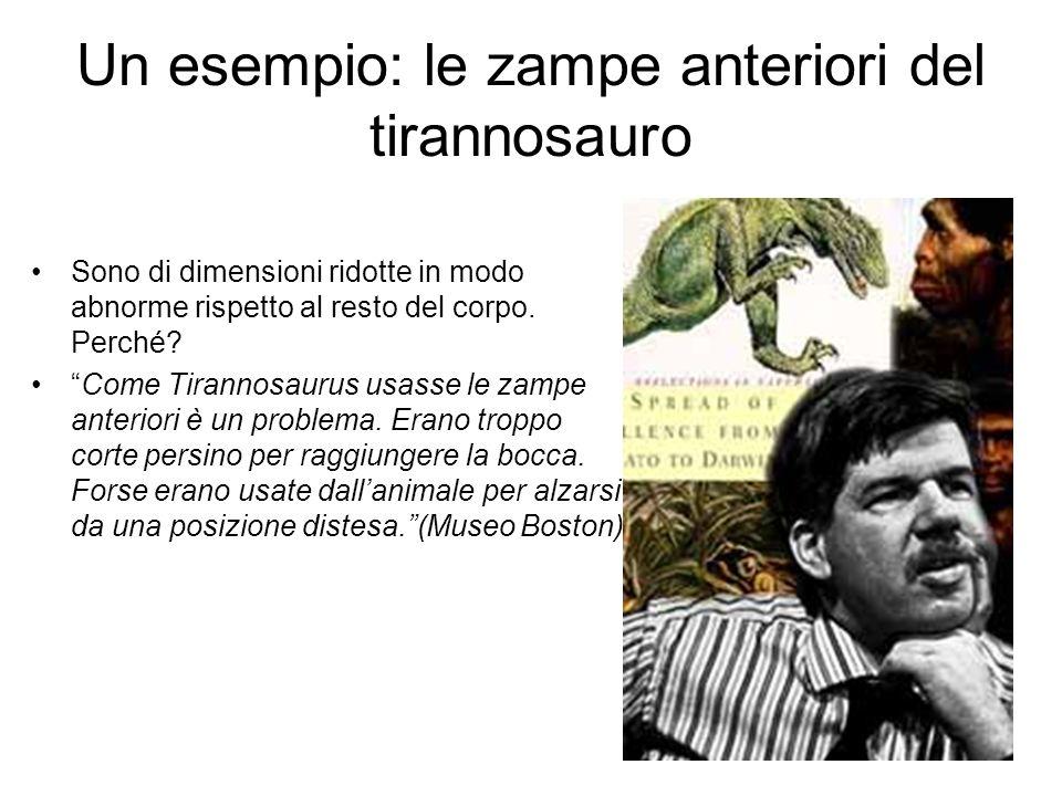 Un esempio: le zampe anteriori del tirannosauro Sono di dimensioni ridotte in modo abnorme rispetto al resto del corpo. Perché? Come Tirannosaurus usa
