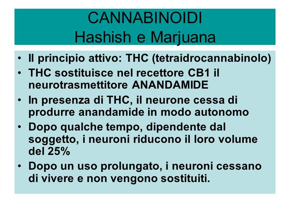 CANNABINOIDI Hashish e Marjuana Il principio attivo: THC (tetraidrocannabinolo) THC sostituisce nel recettore CB1 il neurotrasmettitore ANANDAMIDE In