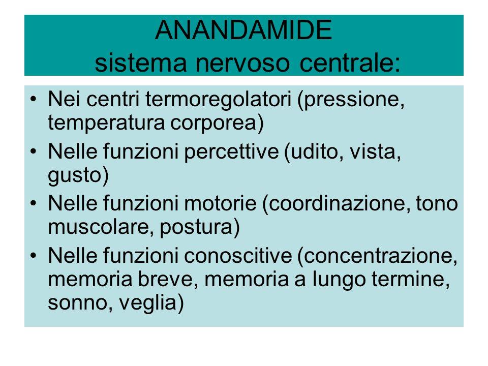 ANANDAMIDE sistema nervoso centrale: Nei centri termoregolatori (pressione, temperatura corporea) Nelle funzioni percettive (udito, vista, gusto) Nell