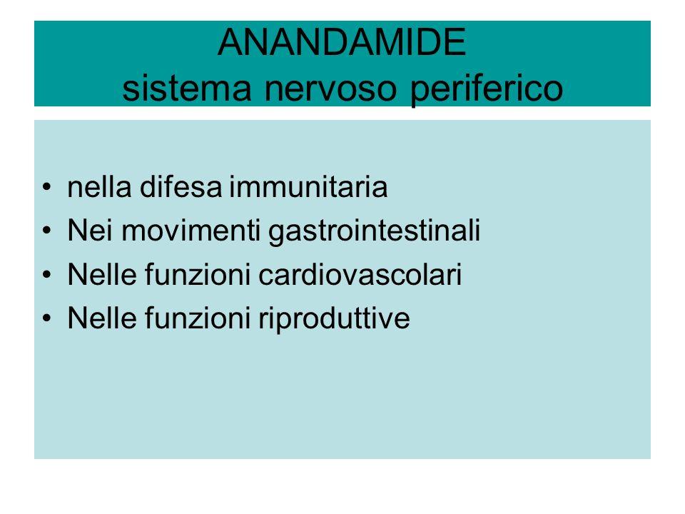 ANANDAMIDE sistema nervoso periferico nella difesa immunitaria Nei movimenti gastrointestinali Nelle funzioni cardiovascolari Nelle funzioni riprodutt