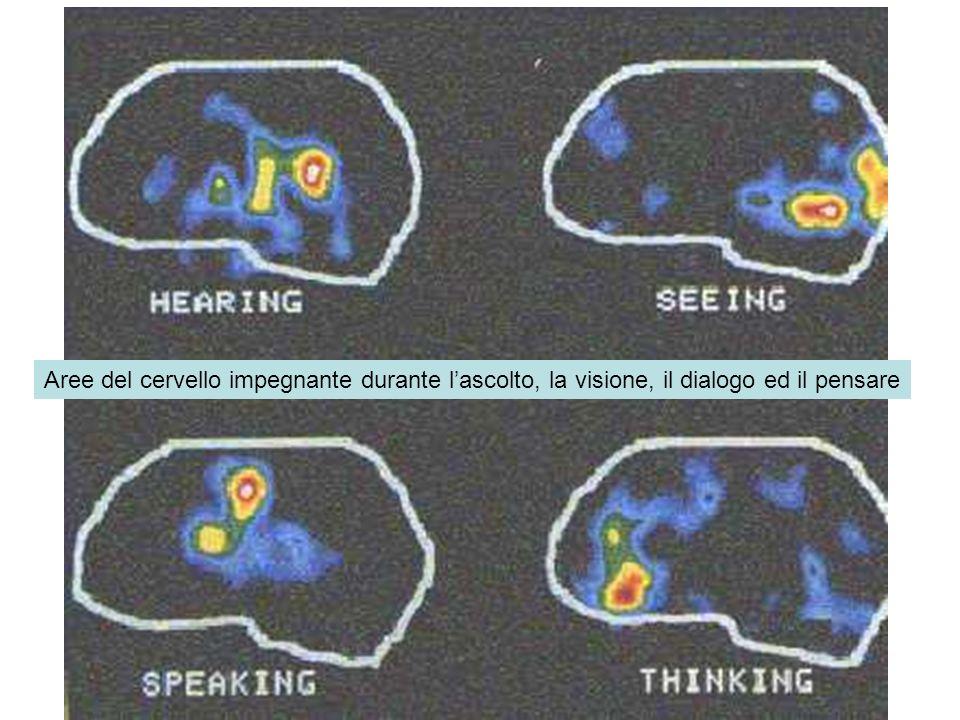 Aree del cervello impegnante durante lascolto, la visione, il dialogo ed il pensare