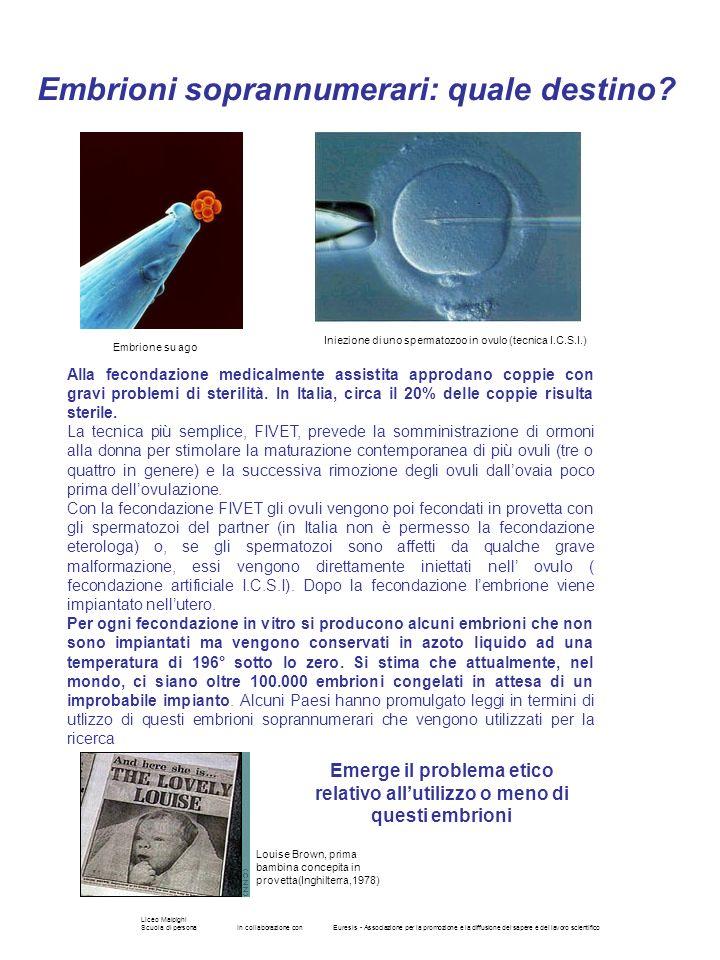 Liceo Malpighi Scuola di personaIn collaborazione conEuresis - Associazione per la promozione e la diffusione del sapere e del lavoro scientifico Alla