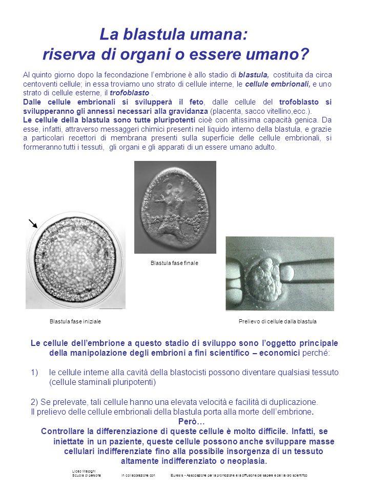 Liceo Malpighi Scuola di personaIn collaborazione conEuresis - Associazione per la promozione e la diffusione del sapere e del lavoro scientifico Le c
