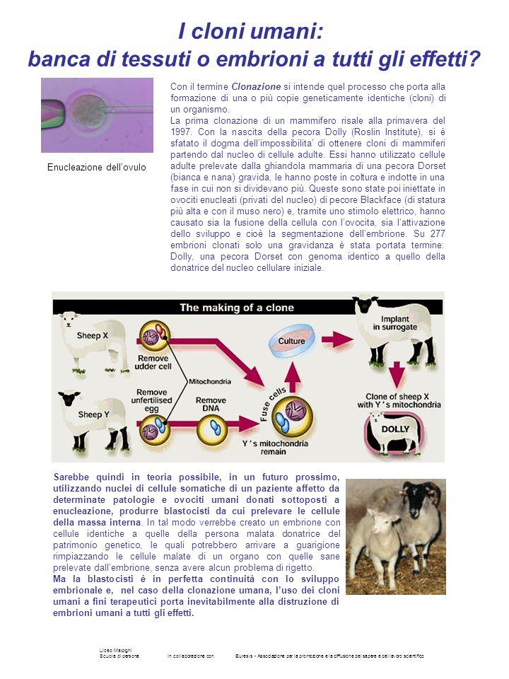 Liceo Malpighi Scuola di personaIn collaborazione conEuresis - Associazione per la promozione e la diffusione del sapere e del lavoro scientifico Con
