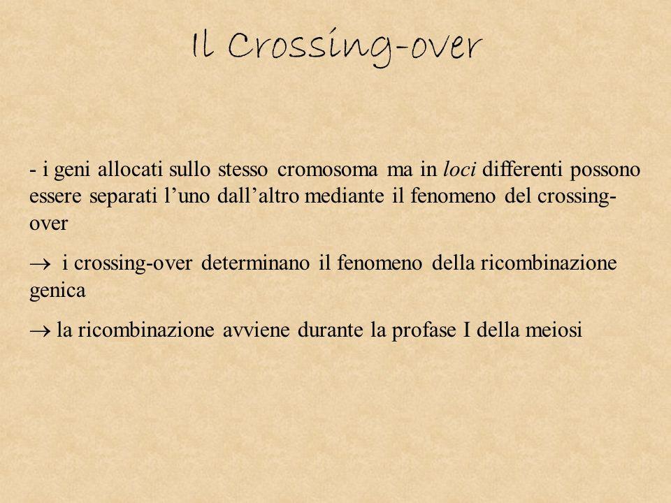 Il Crossing-over - i geni allocati sullo stesso cromosoma ma in loci differenti possono essere separati luno dallaltro mediante il fenomeno del crossi