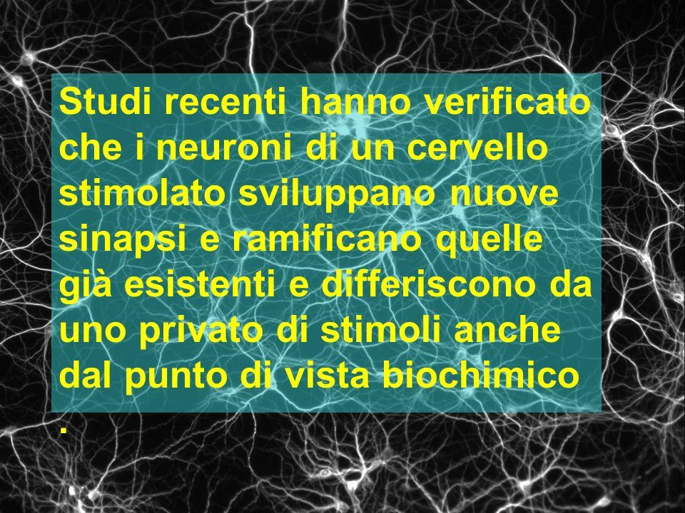Studi recenti hanno verificato che i neuroni di un cervello stimolato sviluppano nuove sinapsi e ramificano quelle già esistenti e differiscono da uno