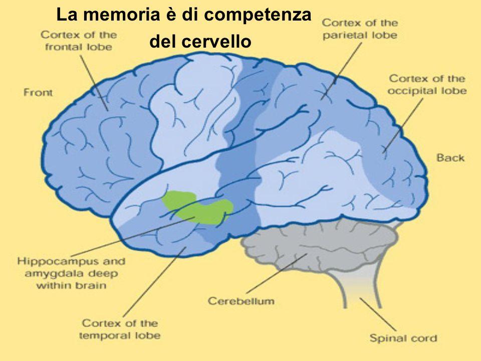 La memoria è di competenza del cervello