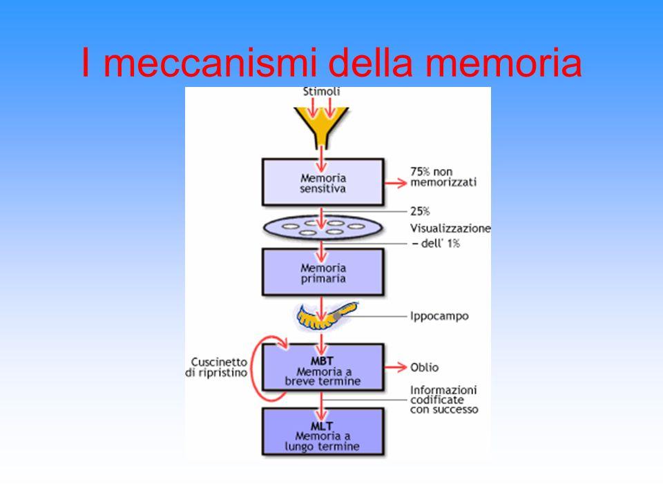 Funzionamento della Memoria a breve e a lungo termine La memoria a breve termine le informazioni si sovrappongono continuamente cancellando le precedenti a meno che… La capacità della memoria a breve termine è quindi limitata:un informazione quindi non è destinata a restarvi a lungo.