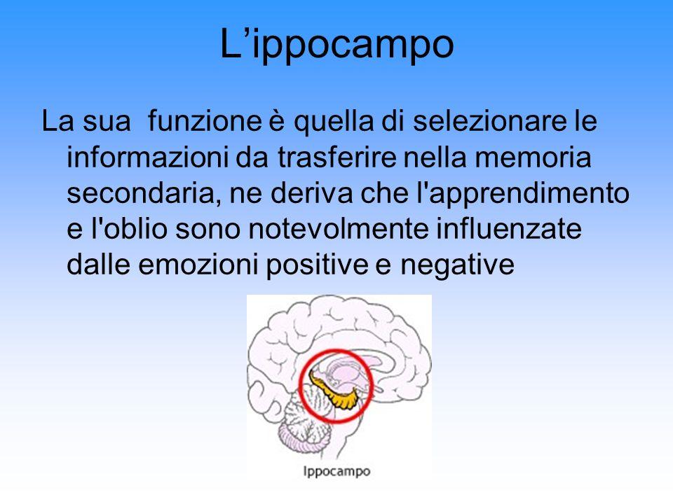 Lippocampo La sua funzione è quella di selezionare le informazioni da trasferire nella memoria secondaria, ne deriva che l'apprendimento e l'oblio son