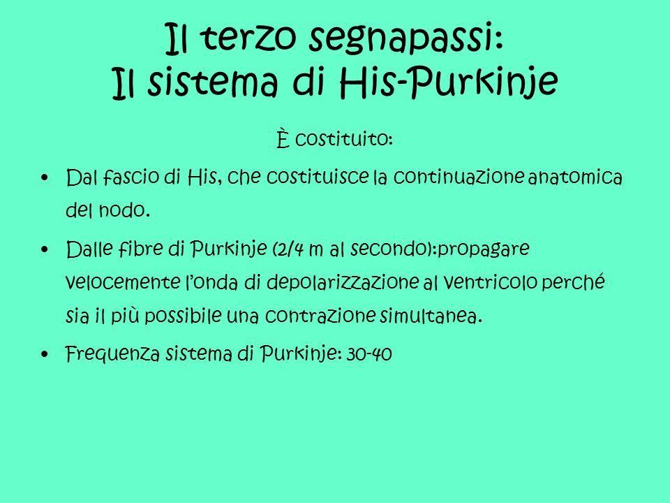 Il terzo segnapassi: Il sistema di His-Purkinje È costituito: Dal fascio di His, che costituisce la continuazione anatomica del nodo. Dalle fibre di P