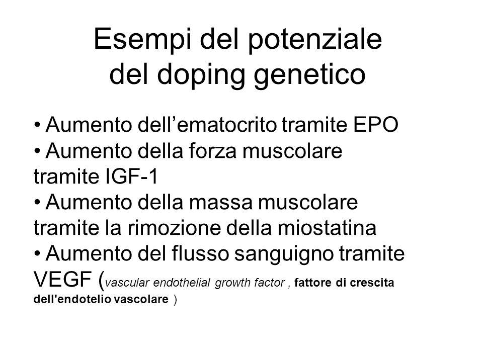 Aumento dellematocrito tramite EPO Aumento della forza muscolare tramite IGF-1 Aumento della massa muscolare tramite la rimozione della miostatina Aumento del flusso sanguigno tramite VEGF ( vascular endothelial growth factor, fattore di crescita dell endotelio vascolare ) Esempi del potenziale del doping genetico