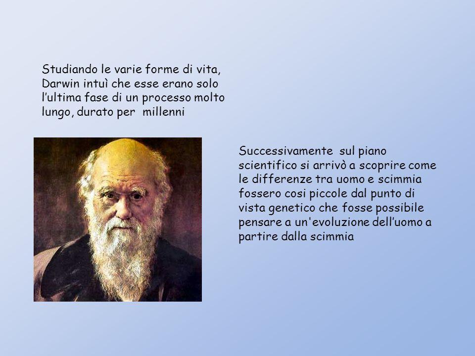 Studiando le varie forme di vita, Darwin intuì che esse erano solo lultima fase di un processo molto lungo, durato per millenni Successivamente sul piano scientifico si arrivò a scoprire come le differenze tra uomo e scimmia fossero cosi piccole dal punto di vista genetico che fosse possibile pensare a un evoluzione delluomo a partire dalla scimmia