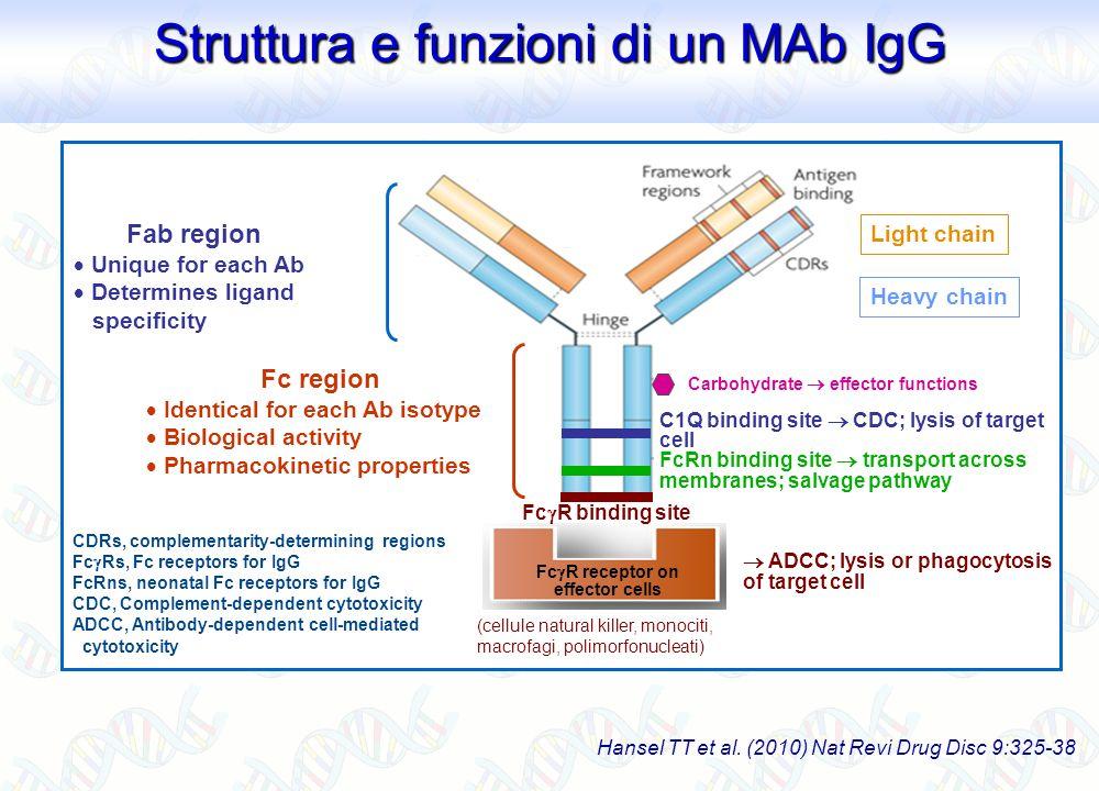 Struttura e funzioni di un MAb IgG Struttura e funzioni di un MAb IgG Hansel TT et al. (2010) Nat Revi Drug Disc 9:325-38 Carbohydrate effector functi