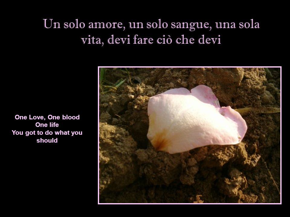 Un solo amore, un solo sangue, una sola vita, devi fare ciò che devi One Love, One blood One life You got to do what you should