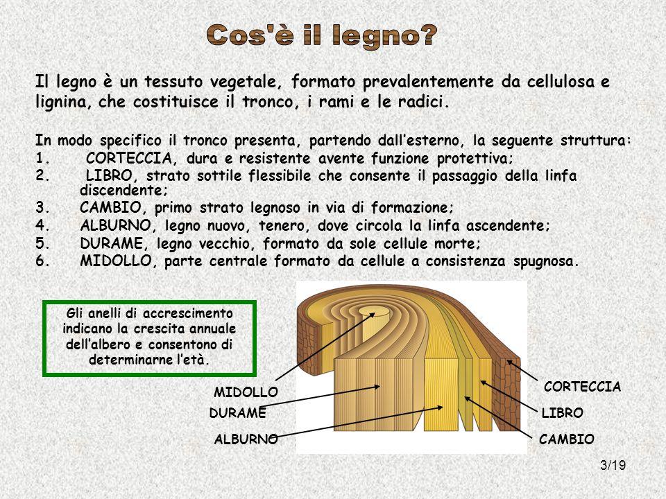3/19 Il legno è un tessuto vegetale, formato prevalentemente da cellulosa e lignina, che costituisce il tronco, i rami e le radici. In modo specifico