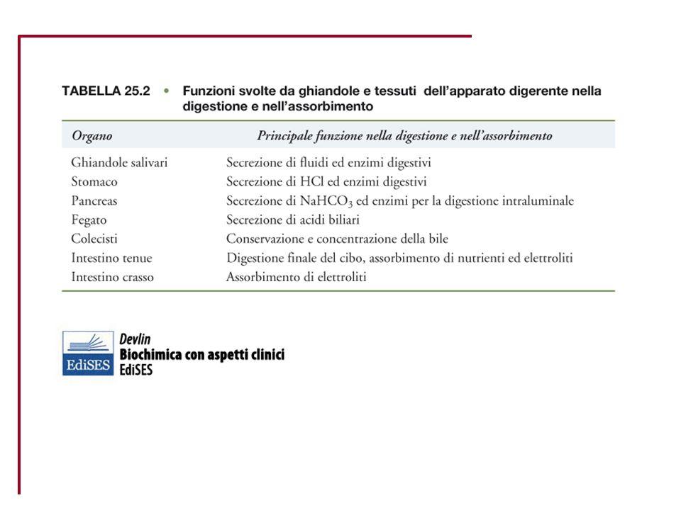 Fabbisogno di nutrienti CategoriaEt à PesoProteine Acidi grassi essenzialiCalcioFosforoPotassioFerroZinco (anni) (1) (kg) (2) (g) (3) (g) (4) (mg)(mg) (6) (mg) w 6w 3 Lattanti0,5-17-1015-1940,560050080074 Bambini1-39-1613-2340,7800 74 4-616-2221-2841800 110096 7-1023-3329-42411000 200097 Maschi11-1435-5344-65511200 3100129 15-1755-6664-7261,51200 3100129 18-29656261,51000 310010 30-59656261,5800 310010 60+656261,51000 310010 Femmine11-1435-5143-58411200 310012/18 (7) 9 15-1752-5556-57511200 3100187 18-2956534,511000 3100187 30-4956534,51800 3100187 50+56534,511200-1500 (5)* 10003100107 Gestanti 595*5* 11200 310030 (8)* 7 Nutrici 705,511200 31001812